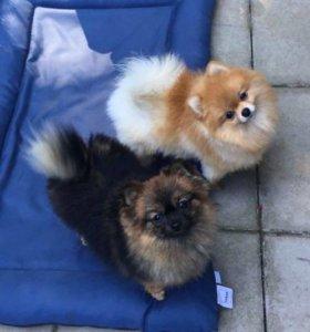 Груминг собак и кошек