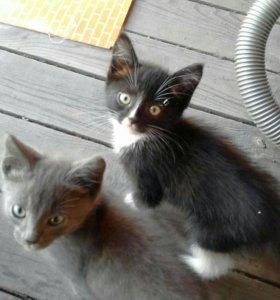 Срочно!!!!!2 котенка девочка и мальчик!