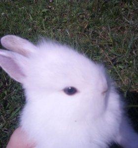 Карликовые кролики .