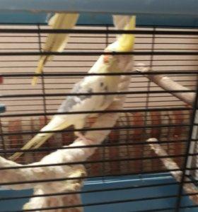 Попугаи и клетка все вместе