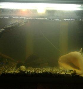 2 аквариума 120 и 25 литров, цена за оба