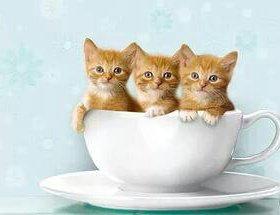 Котята от очень хорошей ловчей кошки.