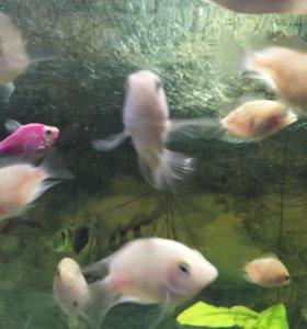 Рыбки - ФЛАМИНГО ❗️