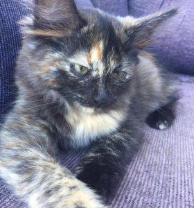 Котятки в дар