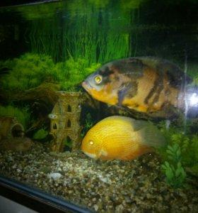 Рыбы в аквариум