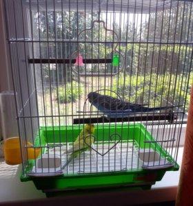 2 попугайчика с клеткой