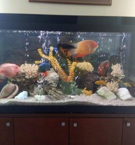 Аквариум с рыбками и декорациями