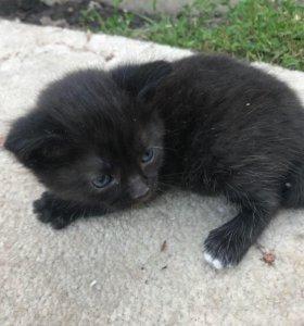 Котятки черные, лечебные!