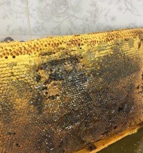 Мёд и соты(Тамбовская обл)
