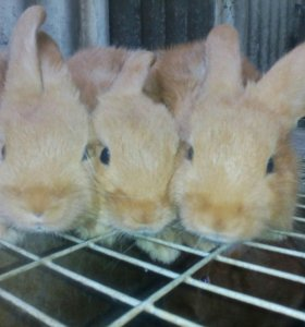 Кролики мясные от 400 рублей