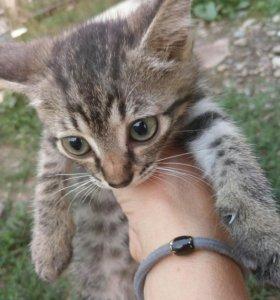 Кошка, 3 месяца