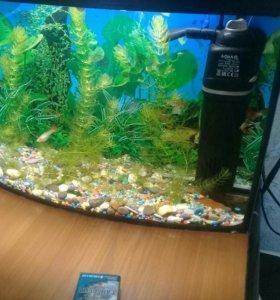 аквариум с рыбками 20 литров со всем содержимым