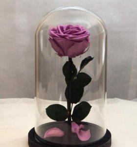 Роза в стеклянной колбе KING