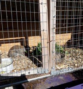Продам крольчат д.р. 26 и 29.06