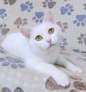 Белая ласковая кошка Лапочка
