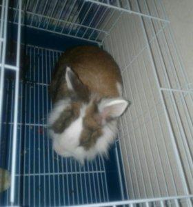 Бесплатно Декоративный кролик