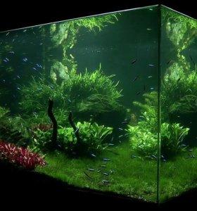 Консультации по содержанию аквариума