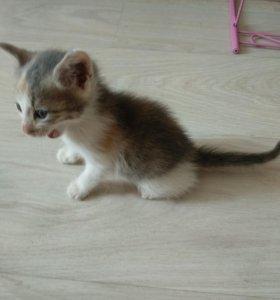 Кошка крейзи