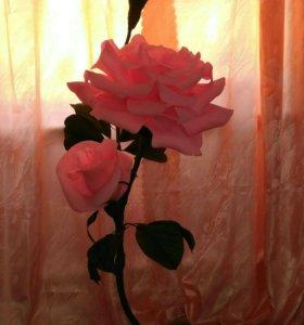 Ростовые цветы, роза