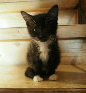 Котёнок мальчик!