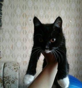 Срочно кошка