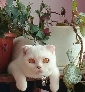 Ждёт кота для вязки.( Агидель)