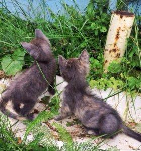 Кошечки малышки