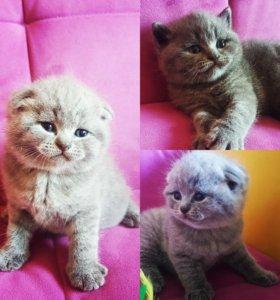 Готовятся к продаже котята.Родились 28.06.2018г