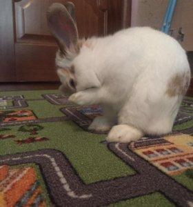 Вязка кролик