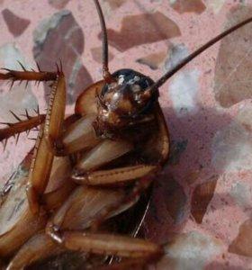 Уничтожение насекомых, грызунов, плесени