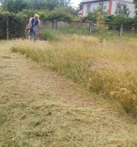 Помогу скосить траву на участке.