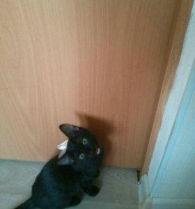 Котенок  Смайлик
