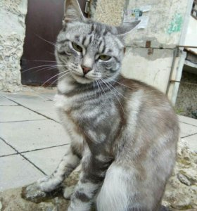 Котик, 6 мес