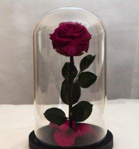 Розы в Колбе MINI