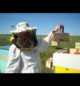 Продам цветочный мед со своей пасеки Скопинского р