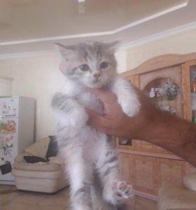 🐱 котёнок в добрые руки