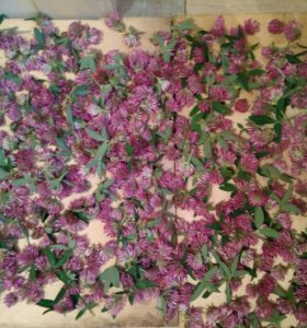 Сушеные цветы клевера, листья малины