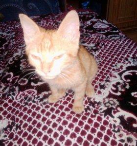 Рыжий котёнок в добрые руки