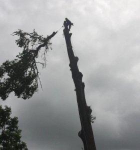 Удаление ( спил) аварийных деревьев