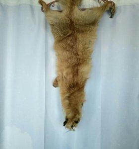 Шкура лисы цельная