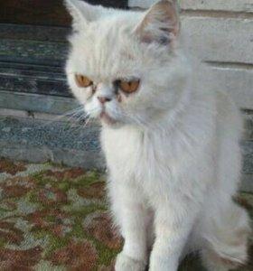 ВАльгешево найдена кошка. Ищем старых или новых хо