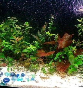 Аквариумные растения и рыбки