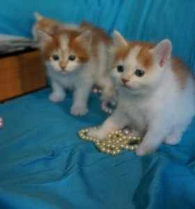 Котята из питомника ищут новых котородителей