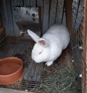 Кролики разных пород и возростов