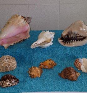 Морские ракушки и кораллы