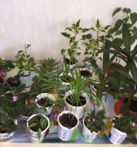 Все цветы по 50 рублей