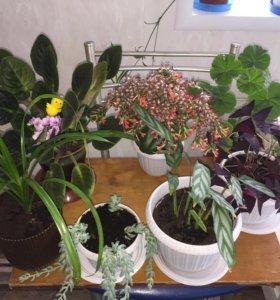 Все цветы по 150 рублей