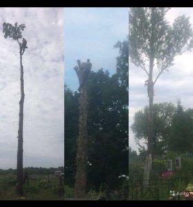Спил Деревьев Профессионально и Безопасно
