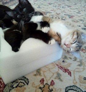 Котик и кошечка. К лотку приучены