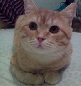 Кот Тиша